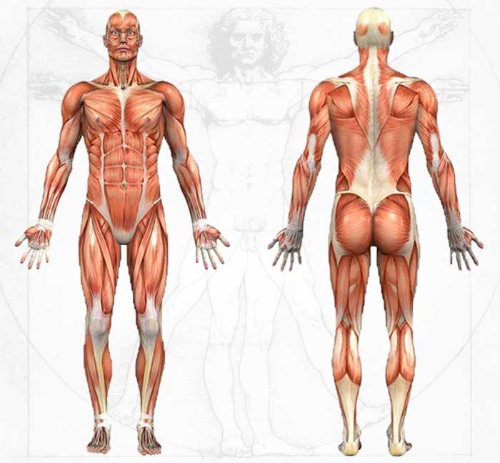 anatomy-information